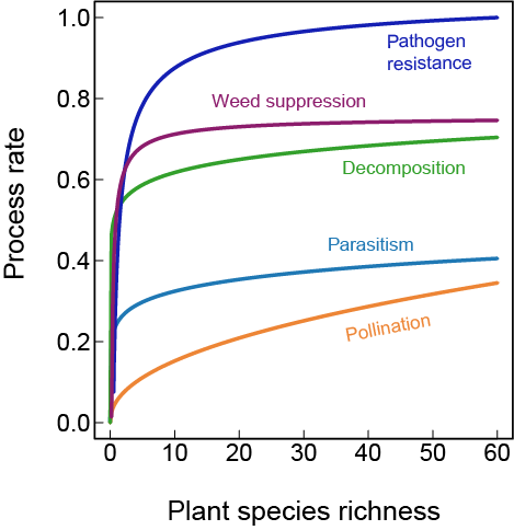 Biodiversity affects ecosystem services