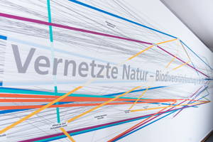Network biodiversity - DFG Jan Schumacher